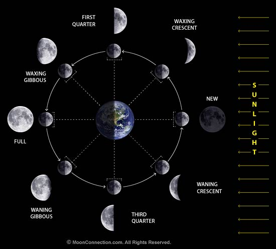 Fun Phases of the Moon Study Guide for 4th Grade | Newton News,Reviews ...