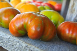 tomatoes, heirloom tomatoes, Land Sake's Farm, organic tomatoes,