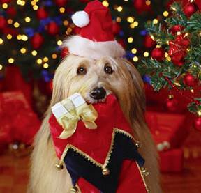 Dog Safety Tips for the Holidays from DogTV