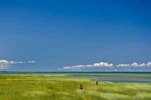 Massachusett's beaches and shoreline wetlands