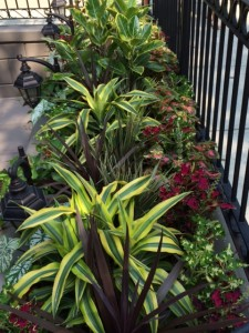 window box and container gardens