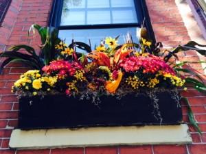 fall flowerbox ideas Boston