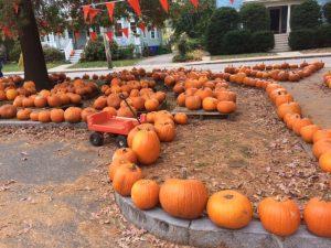 Auburndale Pumpkin Patch!